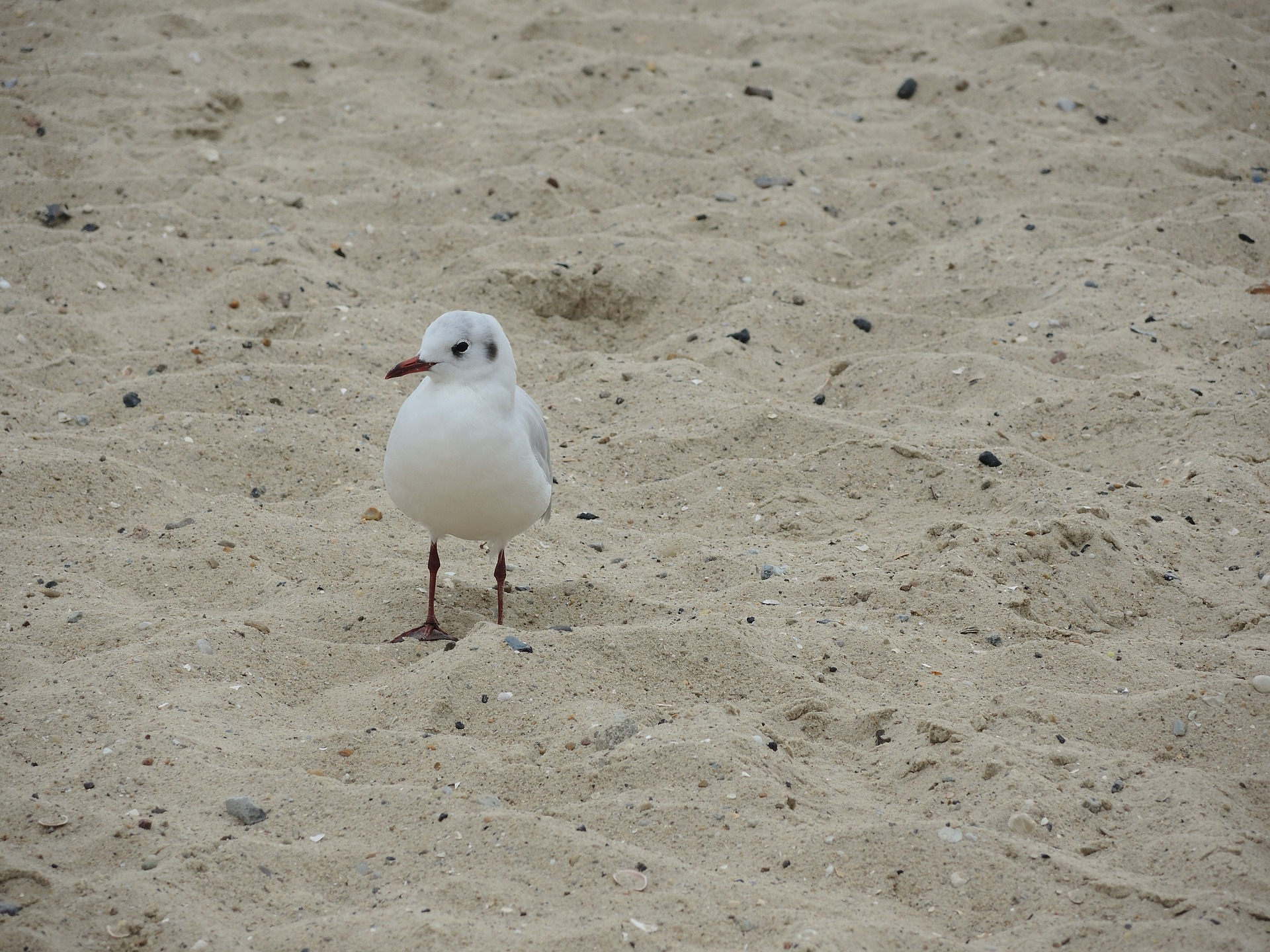 seagull-2085681_1920
